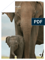 Asian Elephant - WWF Wildlife and Climate Change Series