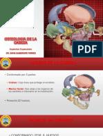 Osteologia Cabeza Especial