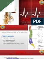 Osteologia Del Cuello