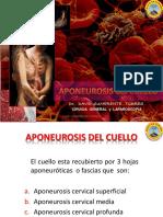 Aponeurosis - Triangulos Del Cuello