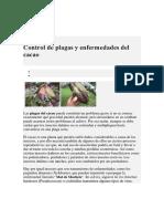 Control de Plagas y Enfermedades Del Cacao