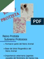 2 1 Phylum Protozoa 2013