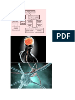Sistema Nervioso Enyger