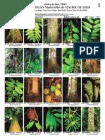 identificacion de arboles madereros de Madre de Dios.pdf