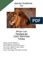 AFRINCAN LION