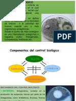 Control Biologico (3)