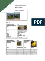 informe-frutas-congelacion