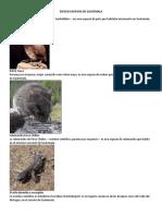 20 Especies Nativas de Guatemala