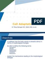 2. Cellular Adaptations