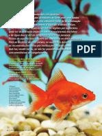 Peixes de Aqurio Animais de Estimao Ou p20160714-5488-Nfff5x