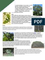 10 plantas maderables