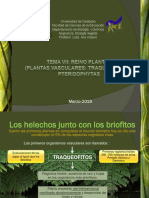 Clase 7 Plantas Vasculares