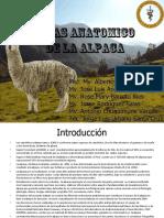 Atlas Anatomico de Alpaca