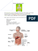Flip Notes Digestion IGCSE