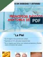 1.- Piel. Anatomía
