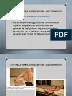 Anatomía normal por imágenes RX