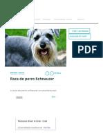 Te Lo Contamos TODO Sobre La Raza de Perro Schnauzer, No Te Lo Pierdas!
