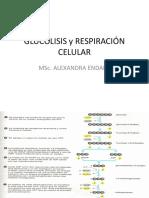 GLUCÓLISIS y RESPIRACIÓN CELULAR.pptx