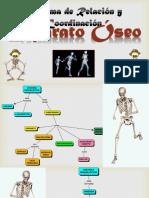 Sistema Oseo Quinto Grado