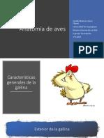 Anatomia_de_aves.pptx