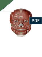 Puntos de Comando Faciales