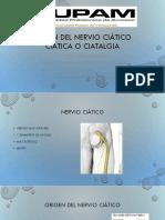 presentacion nervio ciatico