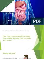 m6 digestive system