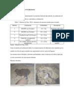 Muestras de suelo y ensayos de laboratorio.docx