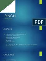 diapositivas de riñón