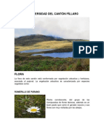 Biodiversidad Del Cantón Píllaro