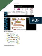 Bio 106 Lecture 5 Chemical Basis of Heredit1