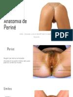 ANATOMÍA DE PERINE