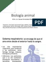 Biología Animal Sistema Respitario
