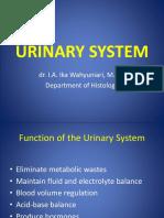 Histology of Urinary System