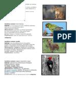 5456+632178987956321321 Fauna de chile