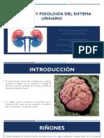 A.Fisiolofgia renal