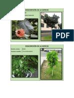 Principales Especies Arboreas Del Rimac