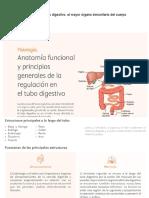 Anatomía Funcional Del Tubo Digestivo
