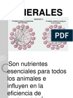 minerales-100603151329-phpapp02.docx
