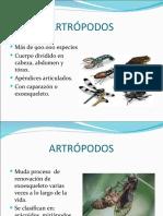 Artropodostamara Alejandra 120530041541 Phpapp02