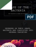 Shape of the Bacteria