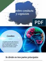 psicologia cerebro.pptx