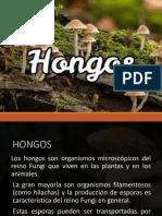 Exposicion hongos