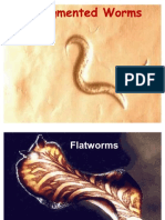 Unsegmented Worms
