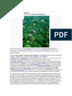 Selva wiki.pdf