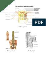 Poze Sistem Nervos
