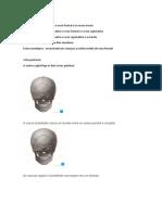suturas cranianas