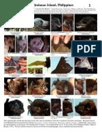 049 Mindanao-Bats v1.2