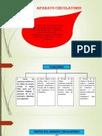 Diapositiva Del Aparato Circulatorio