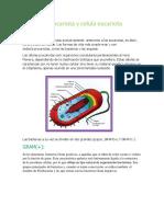 Celula Procariota y Celula Eucariota